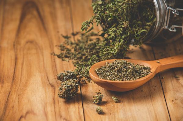 cannabis in veterinaria un articolo della dott.ssa Francesca Saliti Visalli
