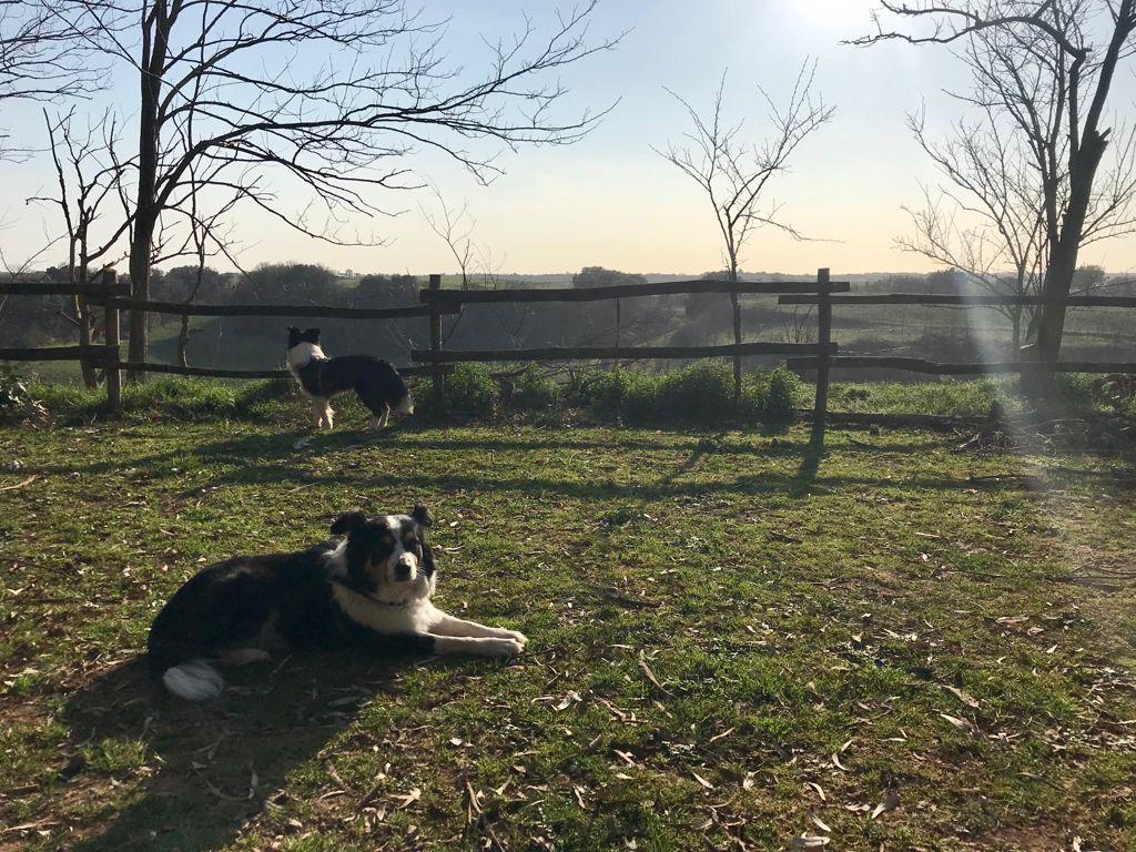 Asilo per cani Roma Sud Centro Cinofilo Barking Dogs
